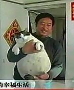 33-lb-cat.jpg